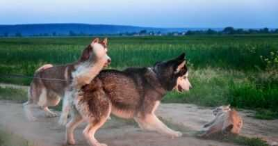 How to Tell If A Dog Is Aggressive Towards Cats?