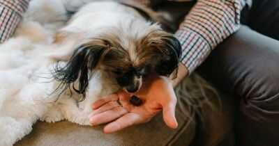 What to Feed an Old Dog That Won't Eat?